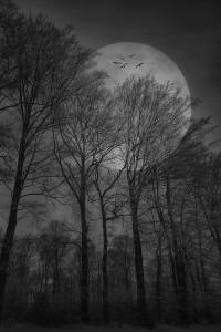 Evil Moon